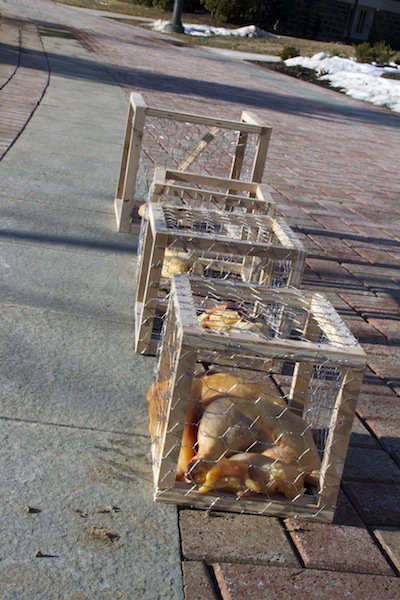 Art display with raw meat in small cages in front of Farinon Center. [Photo by Hana Isihara '17]