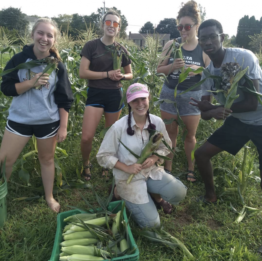 Students+worked+at+LaFarm+throughout+the+summer.+%28Photo+courtesy+of+%40lafayettecollegefarm%29%0A